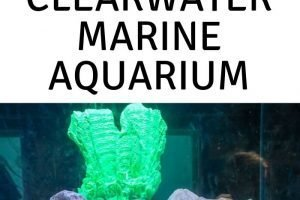 My kids are obsessed with the Dolphin Tales Movies so we had to go visit Winter and Hope at the Clearwater Marine Aquarium. Here is what to expect. #ourroaminghearts #clearwater #florida #aquarium #dolphintalesmove | Clearwater Florida | Florida | Aquariums in Florida | Clearwater Marine Aquarium | Family Attractions