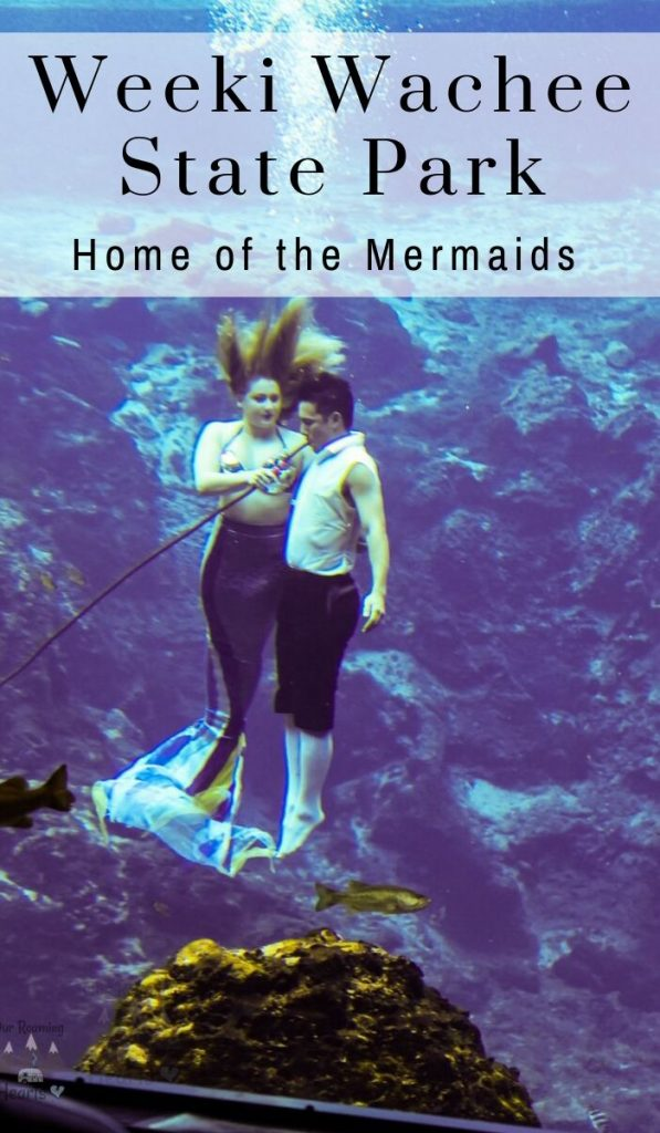 I LOVED seeing the live mermaids at Weeki Wachee Springs State Park in Florida! The springs are beautiful and they have a water park and a riverboat cruise. #FrugalNavyWife #WeekiWacheeSprings #WeekiWacheeMermaids #FloridaStatePark Weeki Wachee Springs | Weeki Wachee Mermaids | Weeki Wachee Springs Kayaking | Weeki Wachee Springs Mermaids