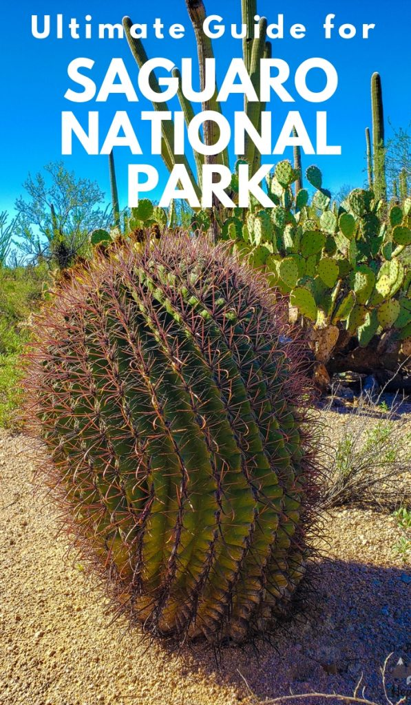 Saguaro National Park Arizona is home to the nation's biggest cacti. Take a ride with me on a virtual tour of this National Park. #nationalpark #saguaronationalpark #arizona #ourroaminghearts | National Parks | Arizona National Parks | Saguaro National Park | Arizona Hiking Trails