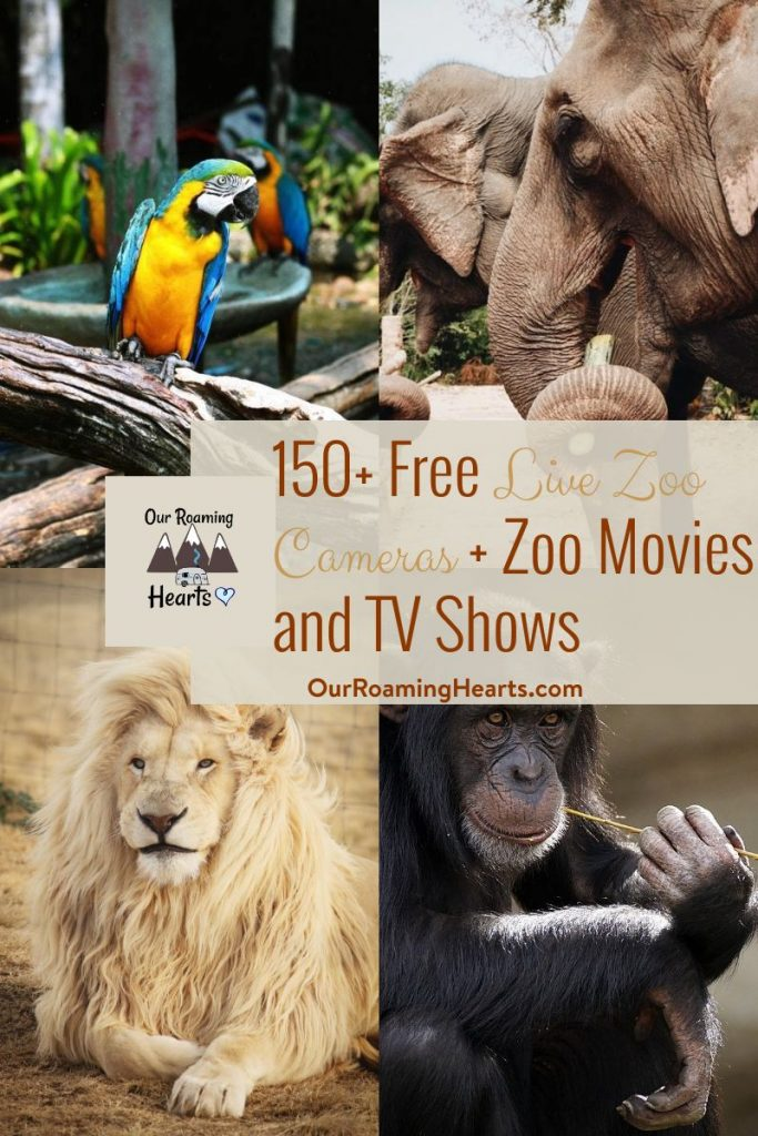 With kids home from school we want to keep them learning! Enjoy this list of over 150 live zoo cameras. Watch feeding times and playtimes. #ourroaminghearts #zoocams #homeschool #roadschool #zoo #fieldtrip #virtualfieldtrip | Homeschool Ideas | Roadschool Ideas | Live Zoo Cams | Virtual Field Trips |